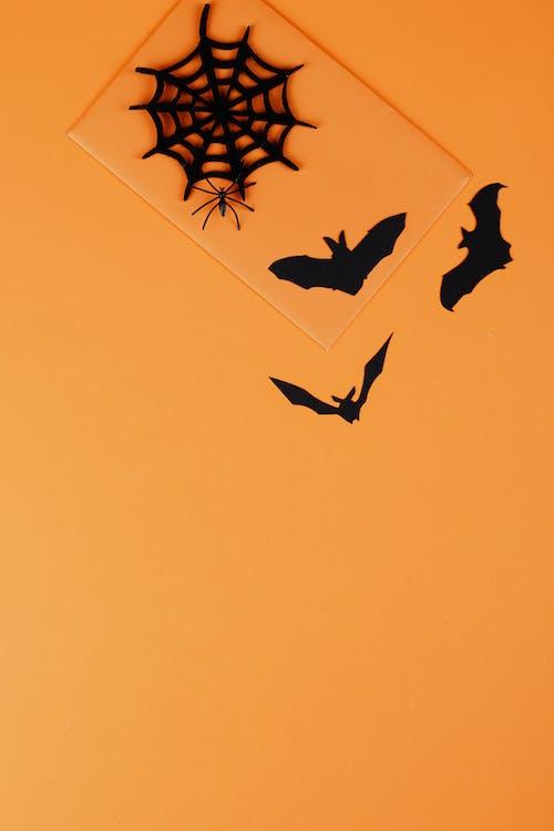 Black Paper Spider and Bats on Orange Background