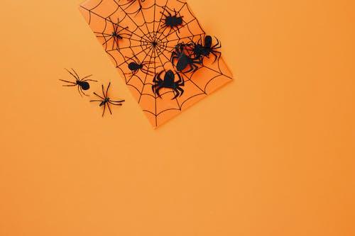 オレンジ色の背景, クモ, コピースペース, シルエットの無料の写真素材