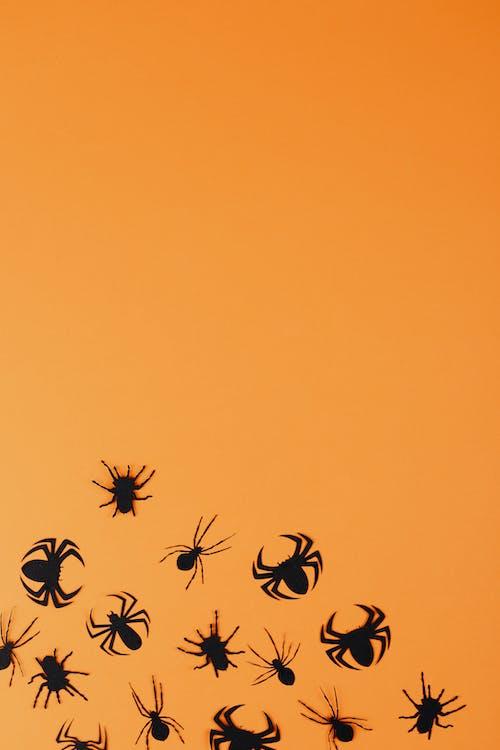 Black Paper Spiders on Orange Background