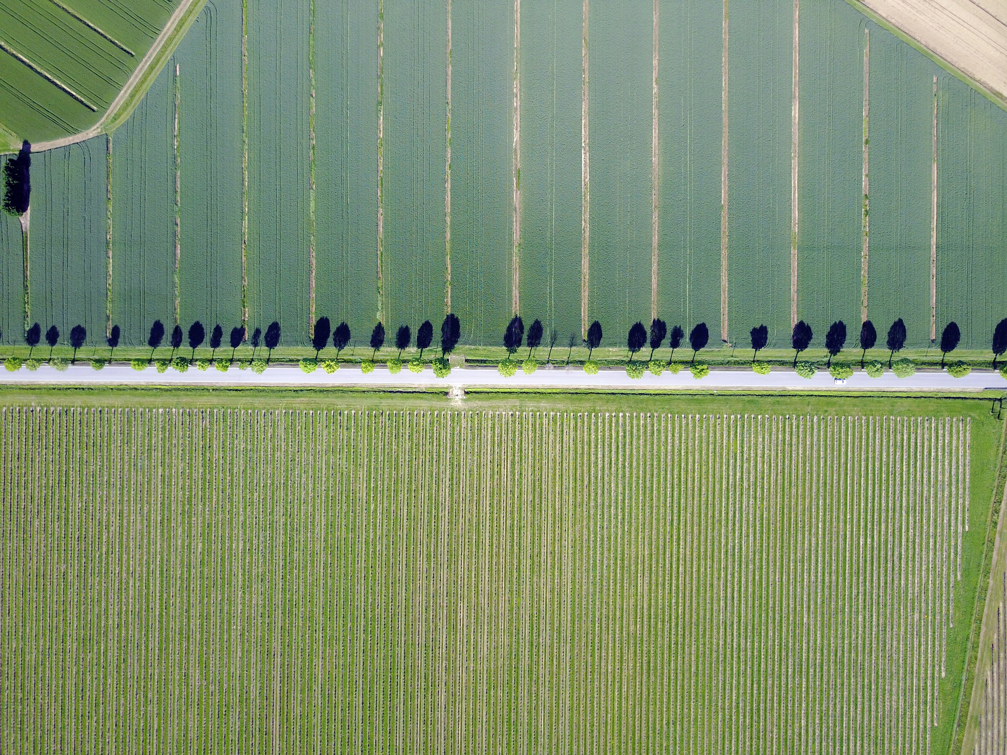Free stock photo of aerial, alberi, grapevine, lonely