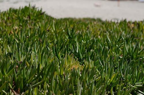Free stock photo of grass, green, green grass