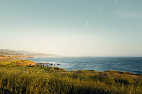 Picturesque scenery of calm ocean washing coastline with green grass under cloudless blue sky