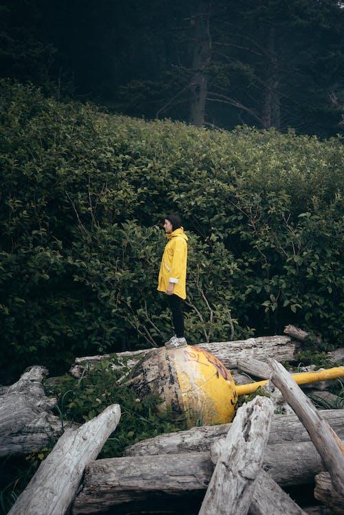 açık hava, anonim, arazi, ayrıntı içeren Ücretsiz stok fotoğraf