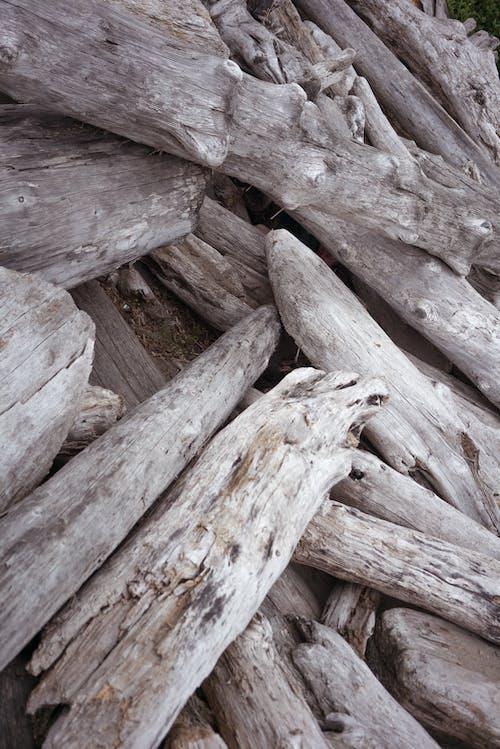 一堆干燥的陈年原木