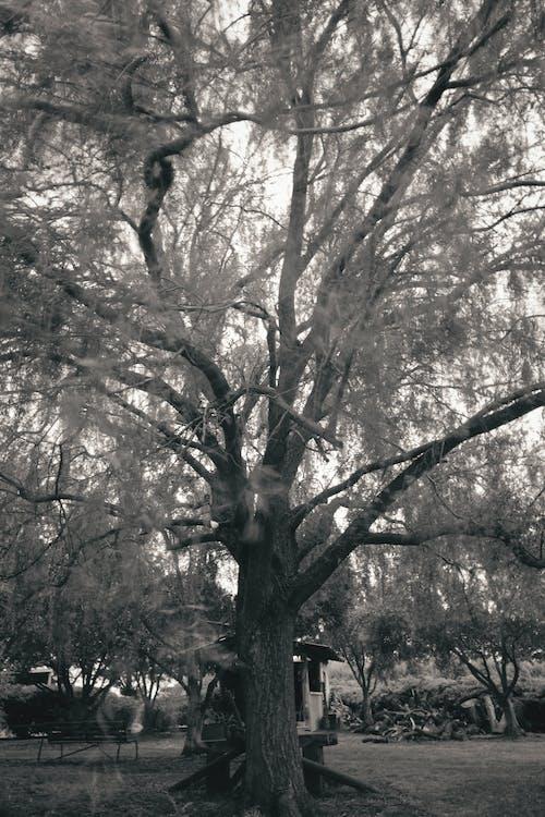 Photos gratuites de arbre, automne, bois, branche