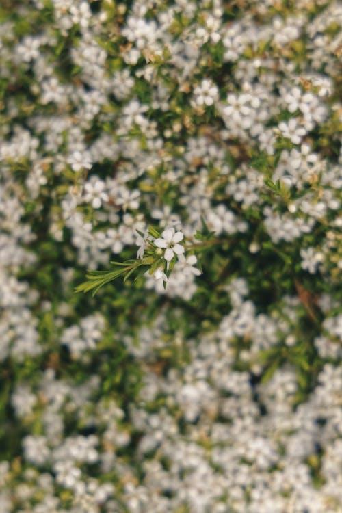 Photos gratuites de arbre, blanc, brillant, buisson