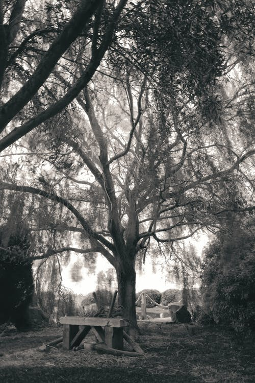 Photos gratuites de arbre, aube, automne, banc