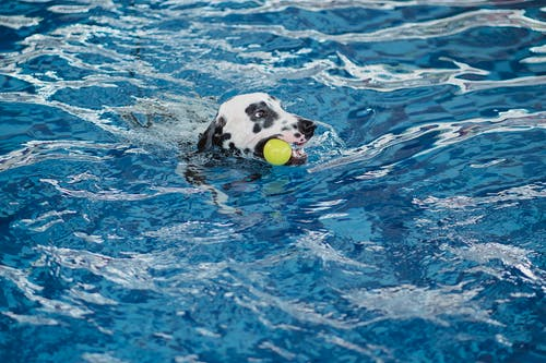 White and Black Short Coated Dog in Water