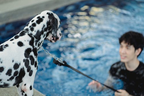 Black and White Dalmatian Dog on Water