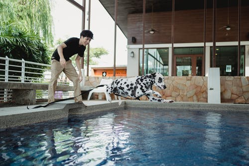Woman in Black and White Polka Dots Dress Holding White and Black Dalmatian Dog Beside Swimming