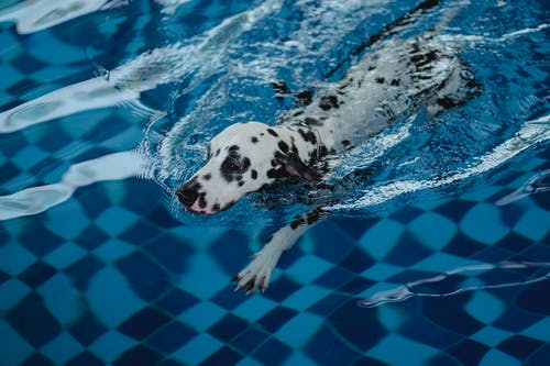Black and White Dalmatian Dog in Water