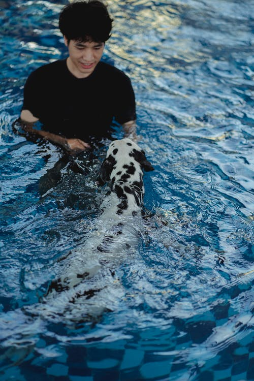 White and Black Dalmatian in Water