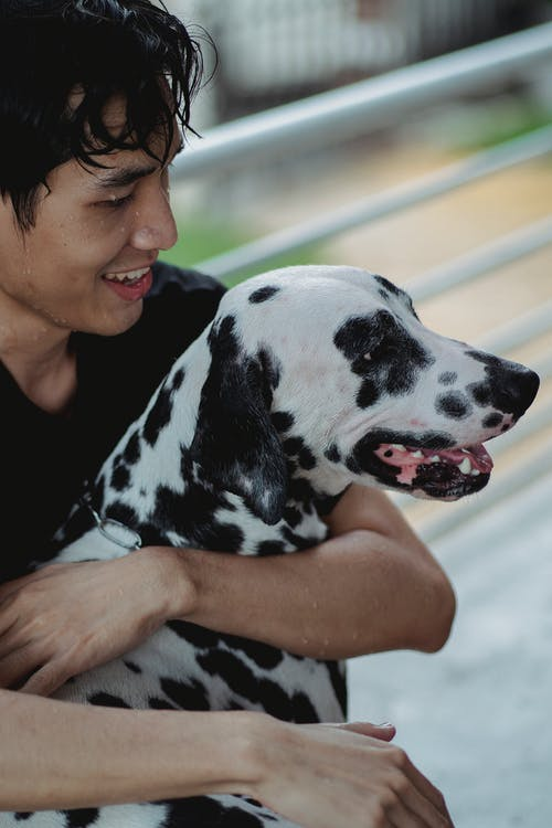 Woman in Black and White Dalmatian Dog
