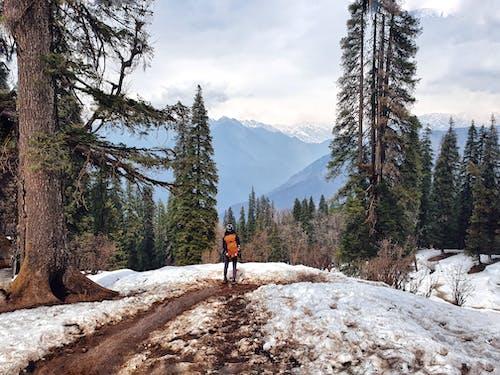 人, 冬季, 冷 的 免费素材图片