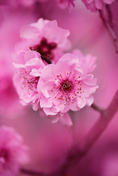 blommor, delikat, flora