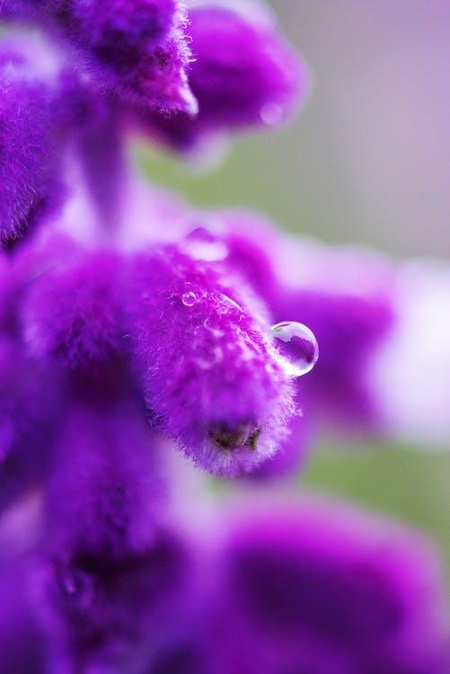 beau, botanique, brillant