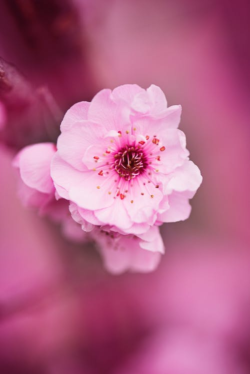White and Pink Petaled Flower Selective Focus Photograph
