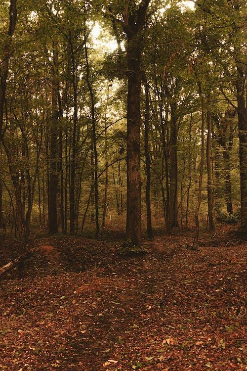 Photos gratuites de arbre, automne, bio