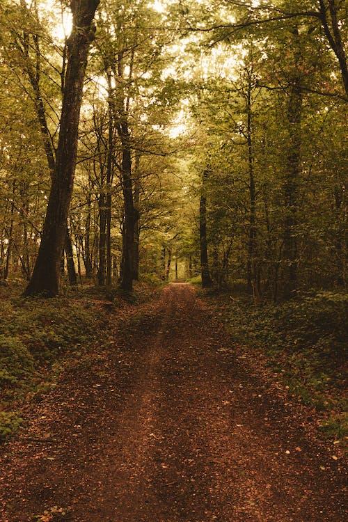 Foto stok gratis alam, alami, bagus