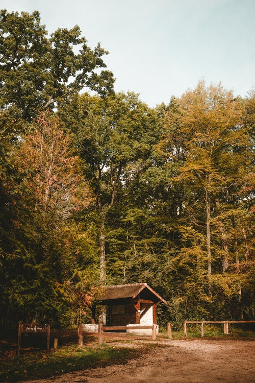 Small house in green forest