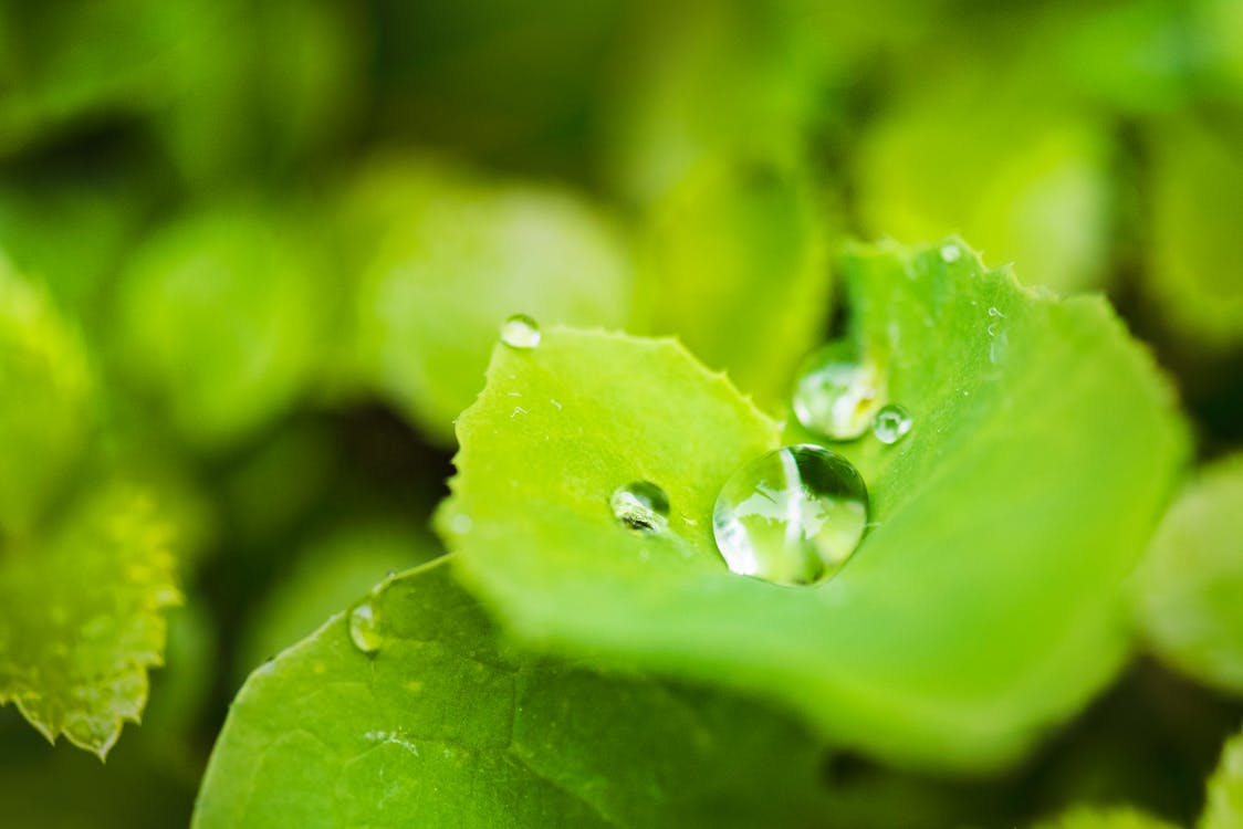 apă, creștere, fotografie macro