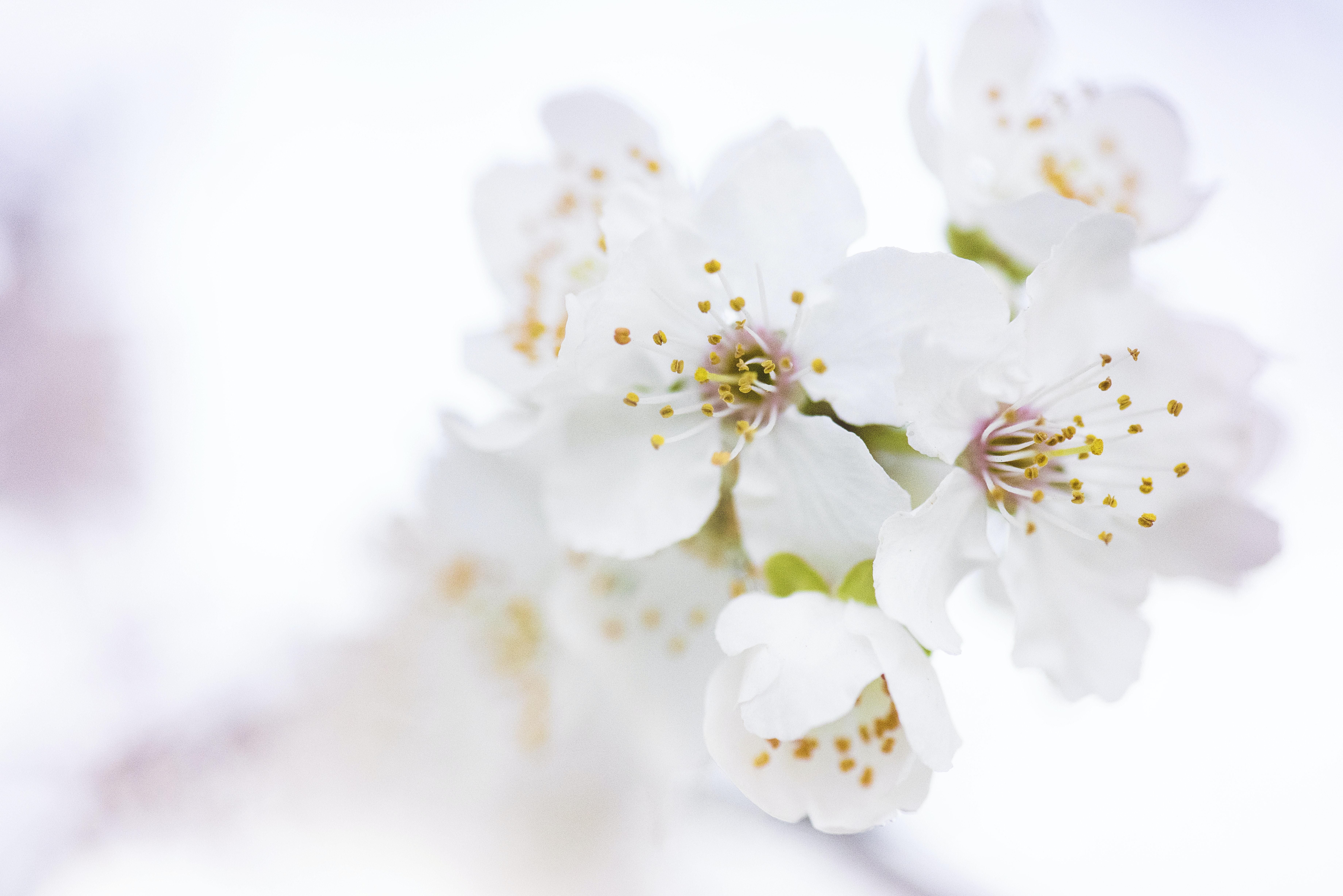 Beautiful White Flowers Photos · · Free Stock