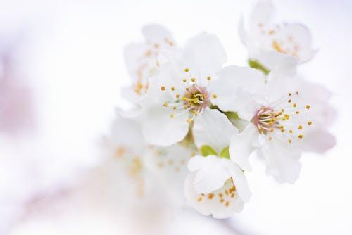 Ilmainen kuvapankkikuva tunnisteilla kasvikunta, kasvu, kauniit kukat, kirkas