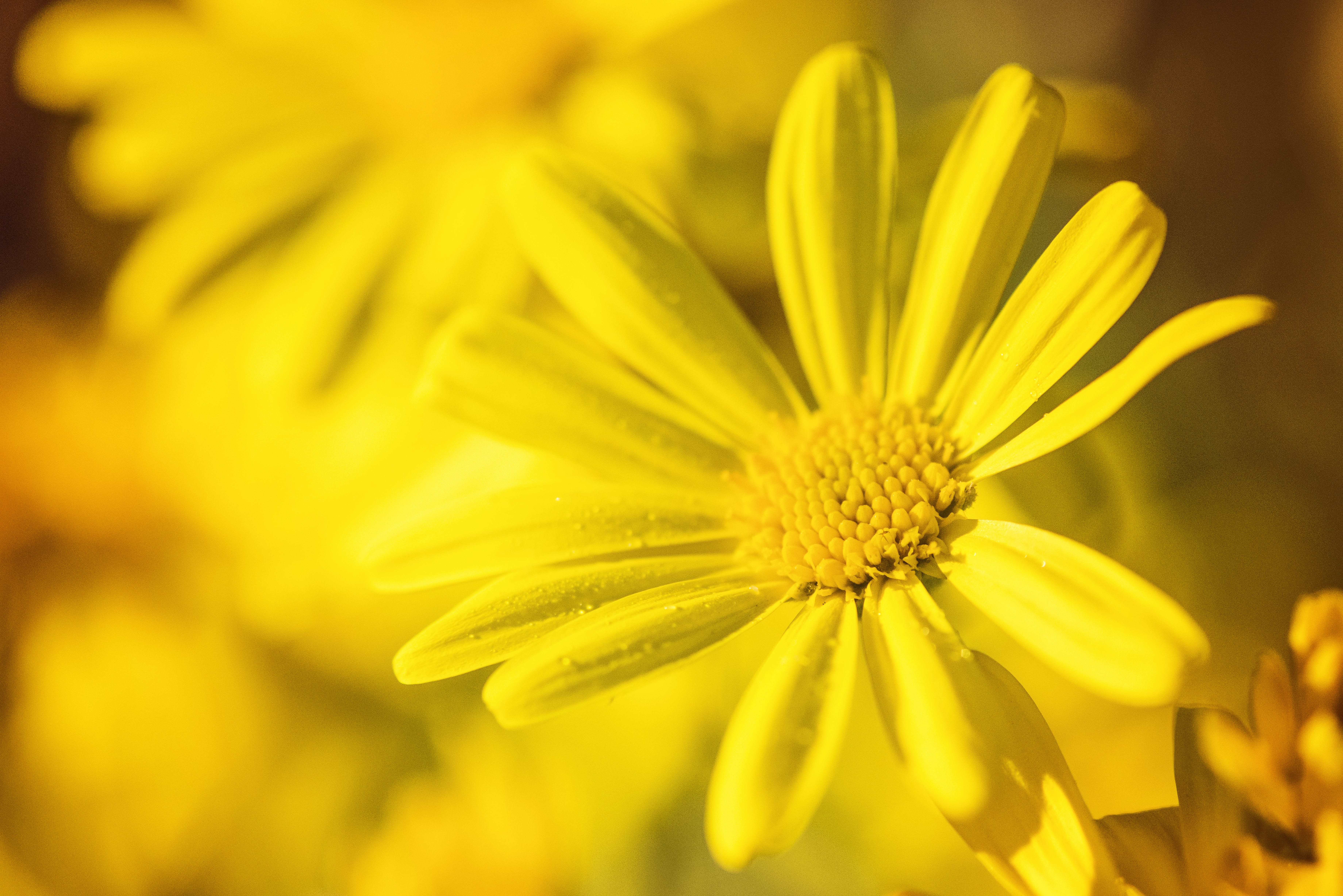 Selective Focus Photography of Yellow Flower in Bloom