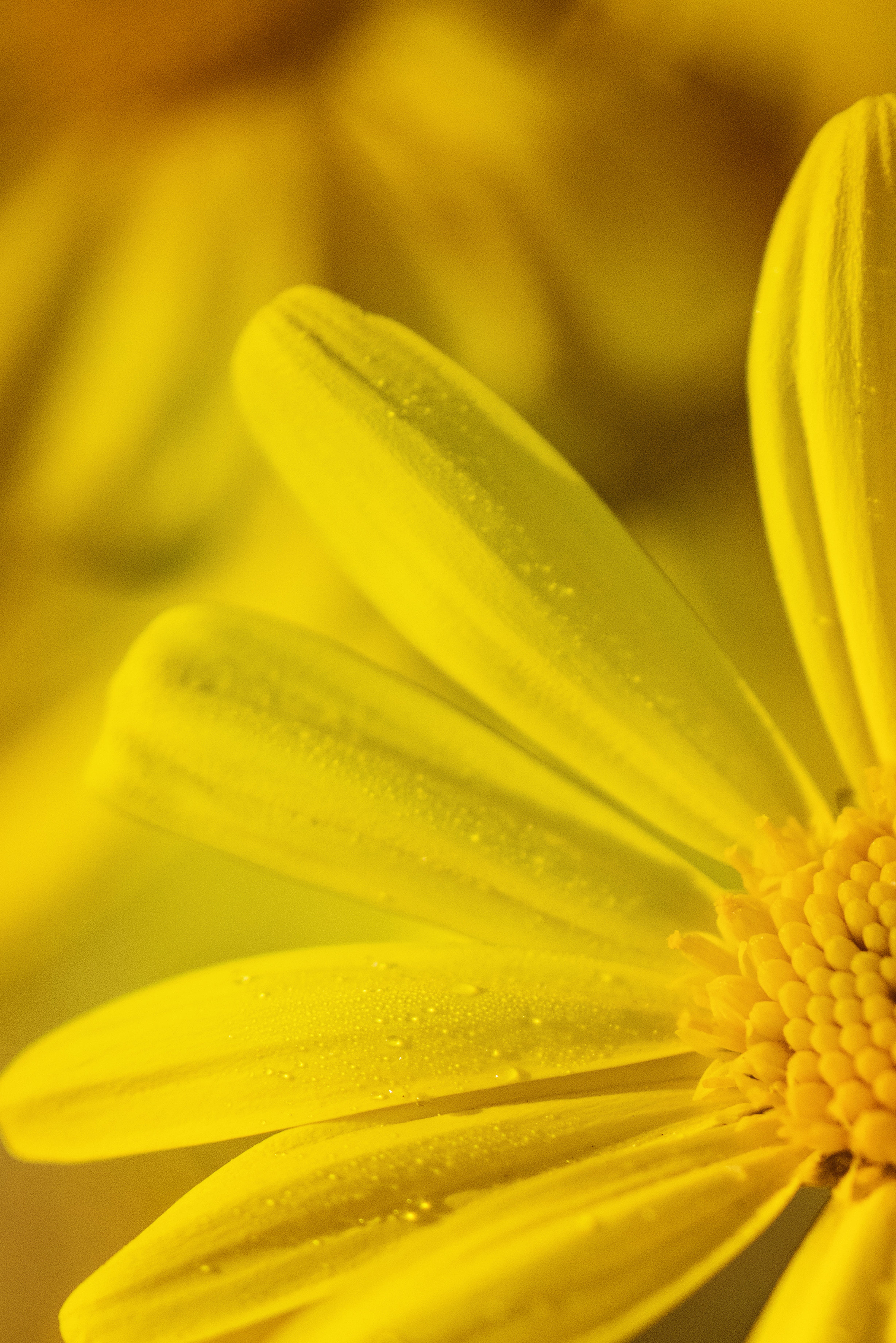 Micro Photo of Yellow Flower