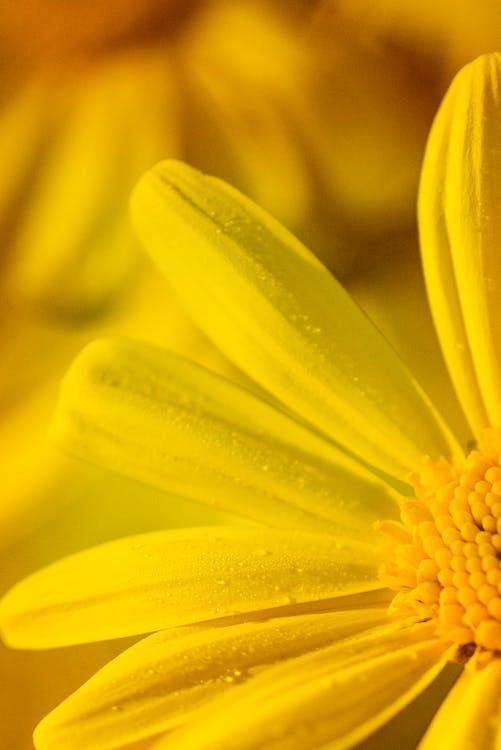 Micro Photo of Yellow Flower