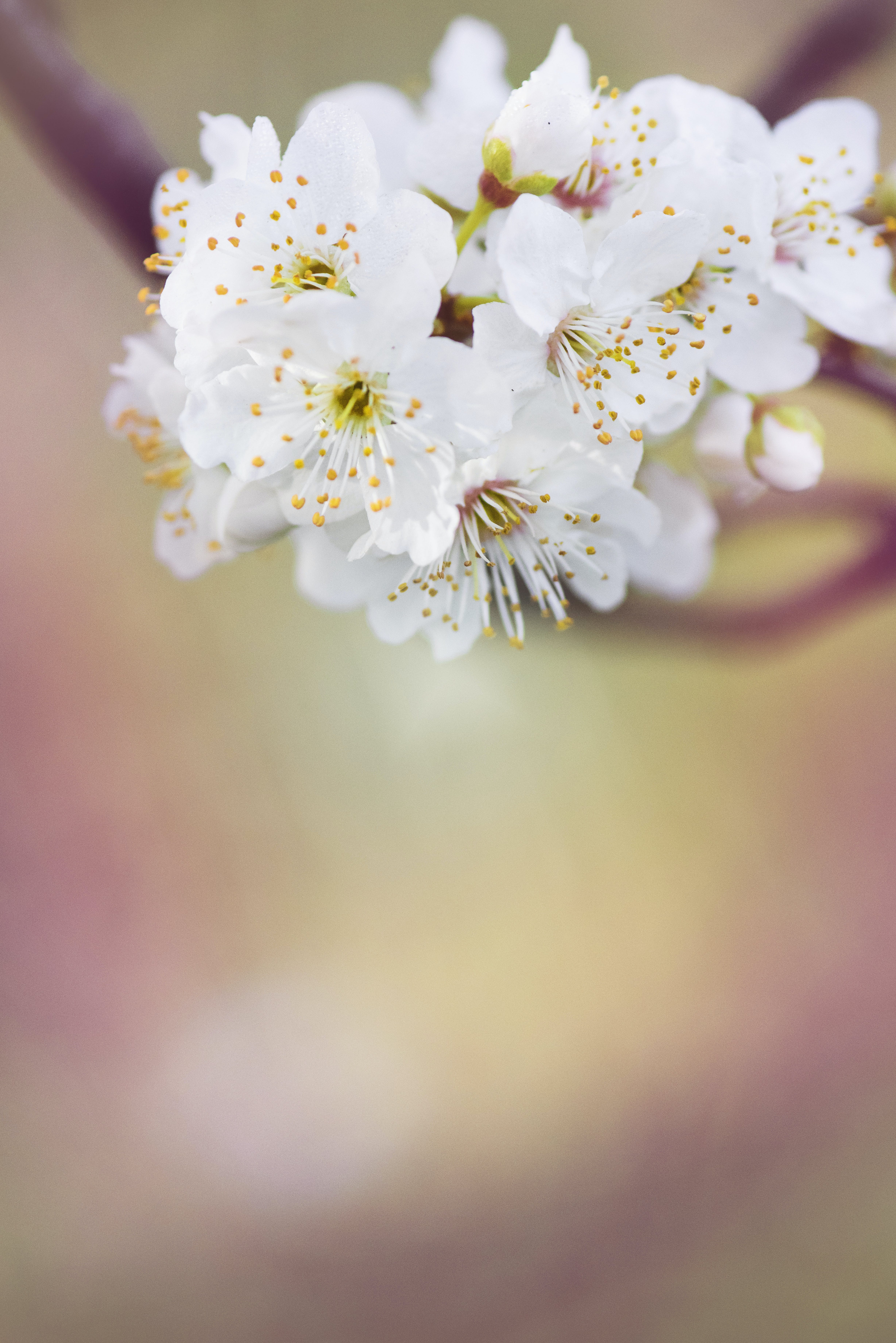 White Petaled Flower Selective Focus Photography