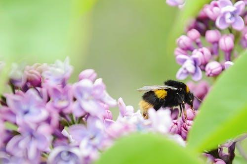 Fotobanka sbezplatnými fotkami na tému detailný záber, hĺbka ostrosti, hmyz, kvety