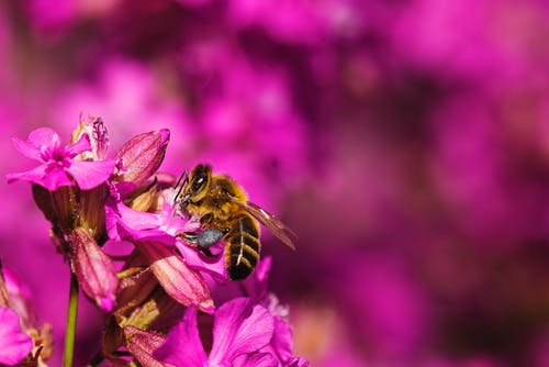 Selective Focus Photography of Bee Collecting Pollen from Flower