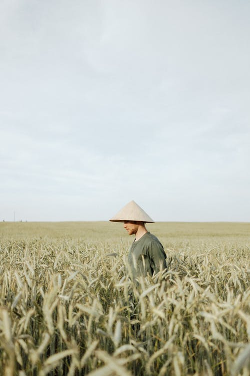 Man in Green Long Sleeve Shirt and Hat Standing on Wheat Field
