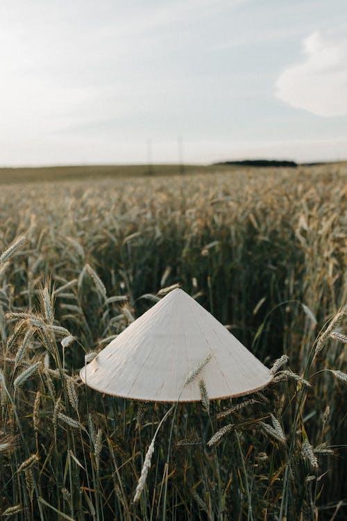 Безкоштовне стокове фото на тему «вертикальний, капелюх, пасовище»