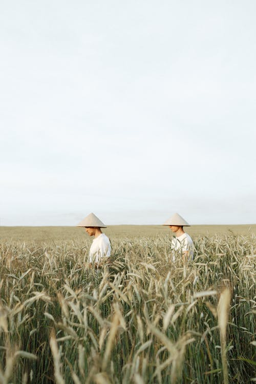 Men Wearing Hats Standing on Wheat Field