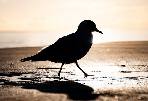 Free stock photo of animal, beach, bird, blinding