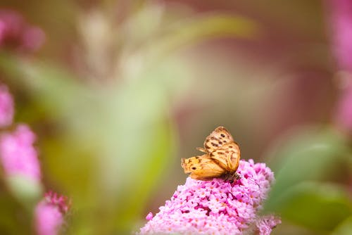 Selective Focus Photography of Brown Butterfly on Pink Petaled Flower