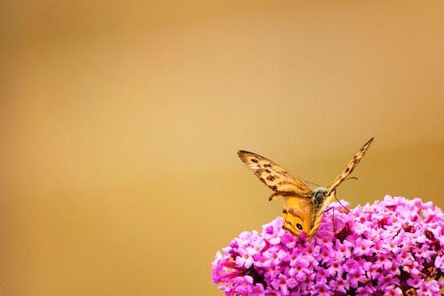 Ingyenes stockfotó állat, fényes, gerinctelen, gyönyörű virágok témában