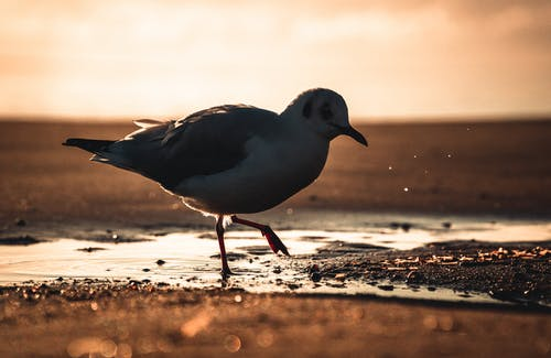 White and Black Bird on Brown Sand
