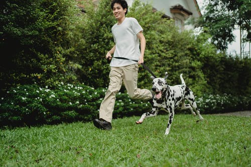 Man in White T-shirt and Brown Pants Holding Dalmatian Dog Leash