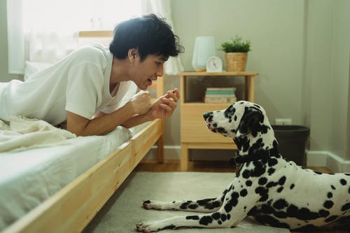 Woman in White T-shirt and Black and White Dalmatian Dog