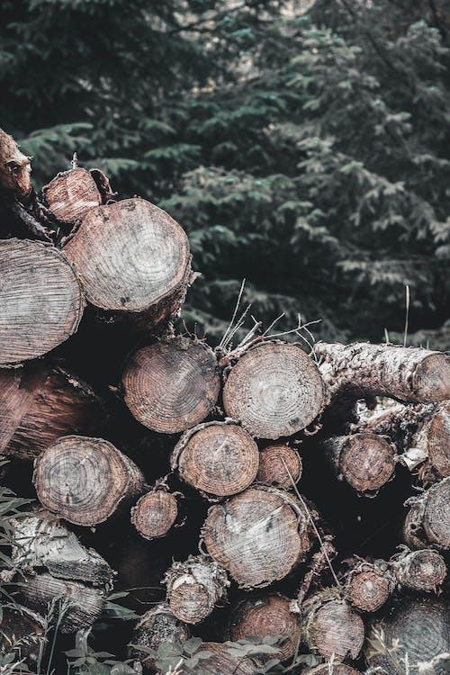 Brown Wood Logs on Green Grass