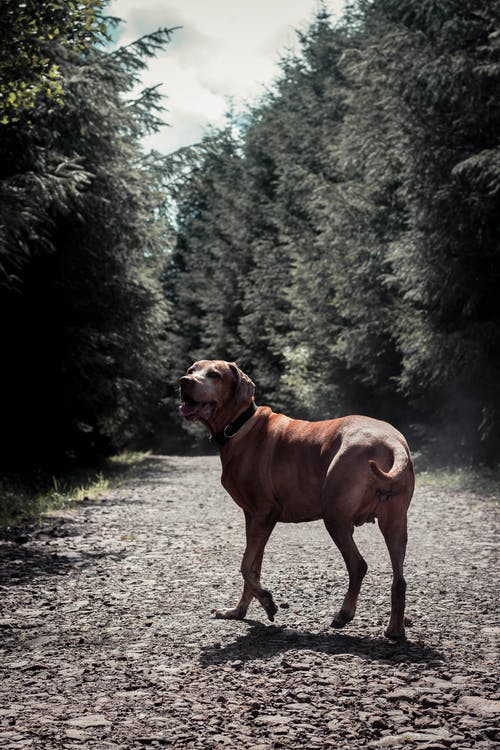 Brown Short Coated Dog on Dirt Road