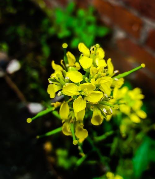 Foto stok gratis alam yang indah, alami, bunga, bunga kuning