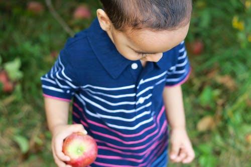 Gratis arkivbilde med apple, eple, eple plukking