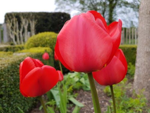 doğa, güzel çiçekler, güzellik, kırmızı çiçek içeren Ücretsiz stok fotoğraf