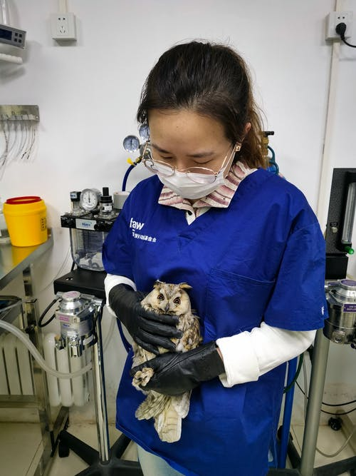 Veterinarian Holding a Long-Eared Owl