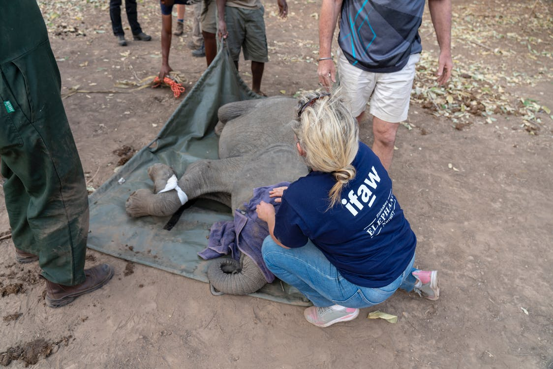 Rescuing a Baby Elephant