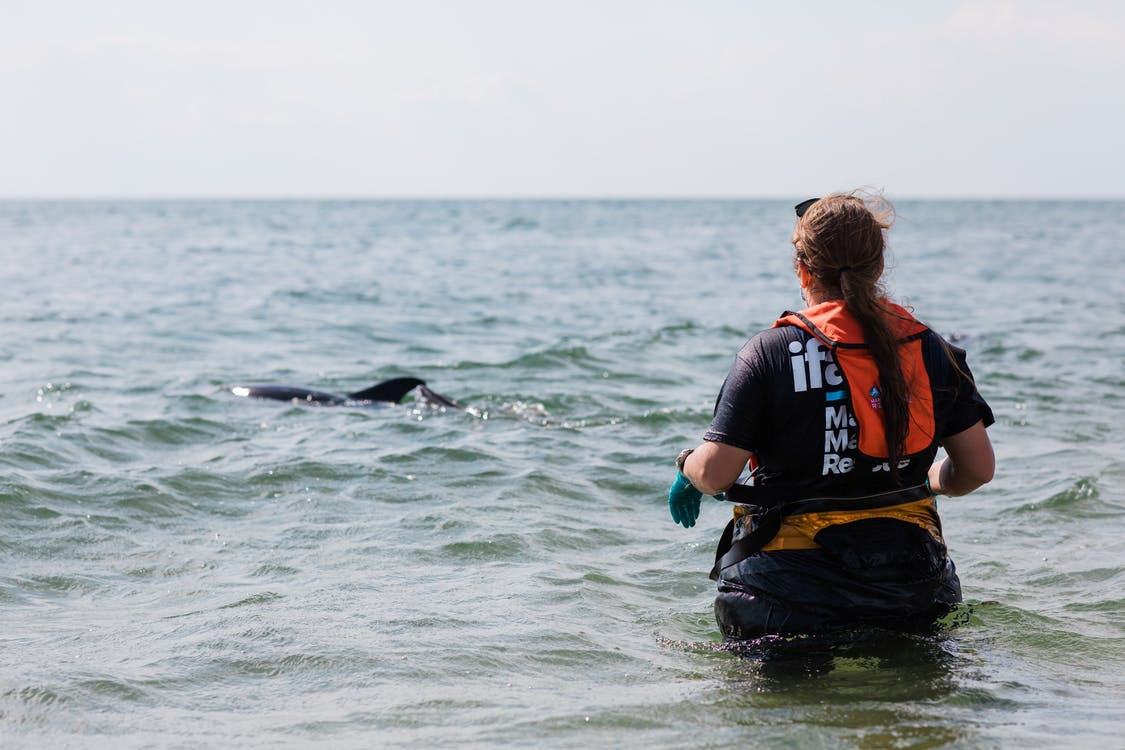 Person Looking at a Dolphin